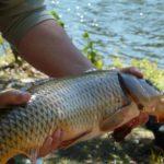 В РФ введут норму вывоза рыбы для любителей